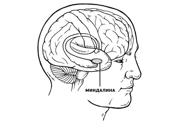Миндалина